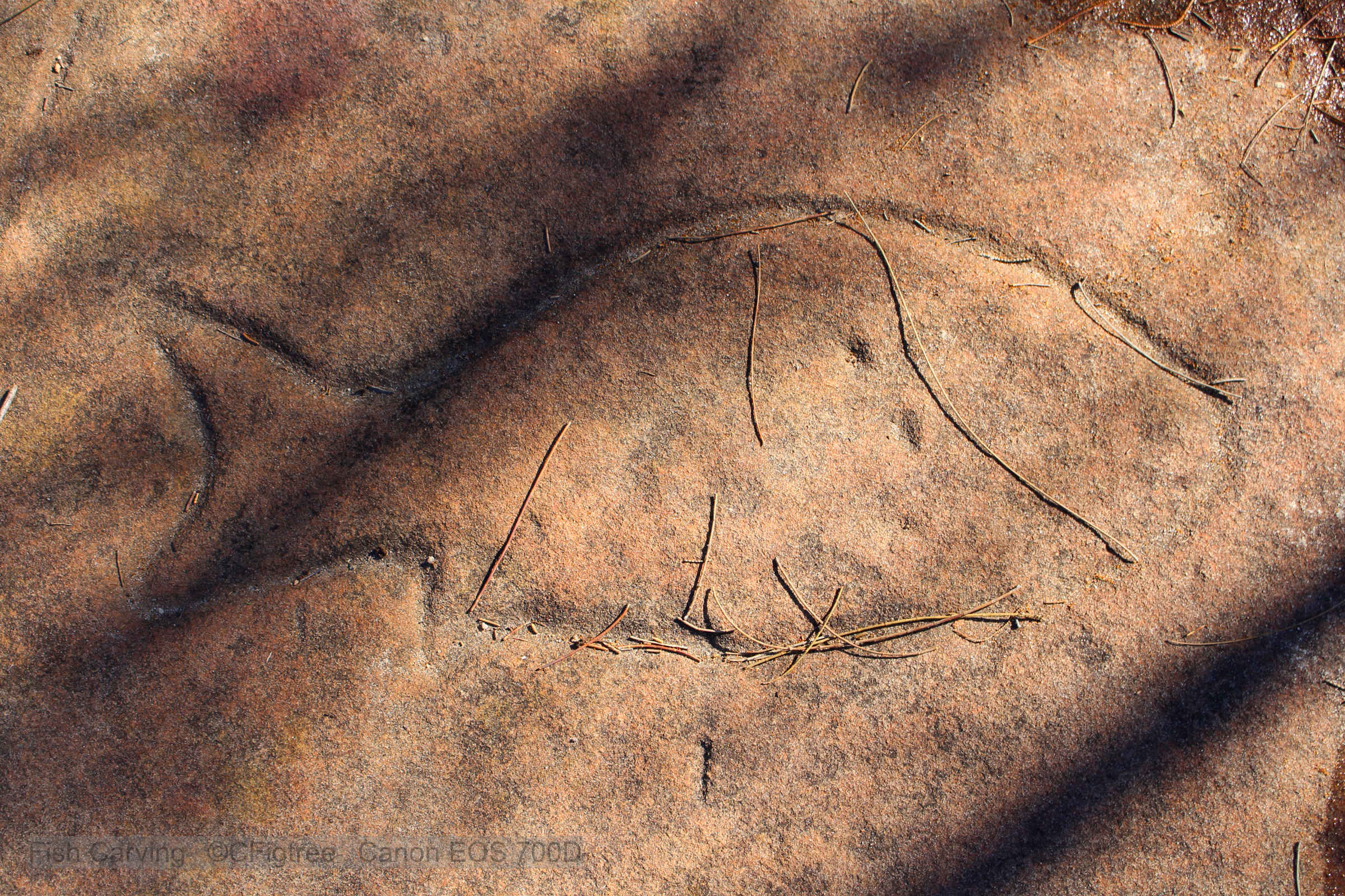 An Aboriginal Carving of a Fish on Sandstone